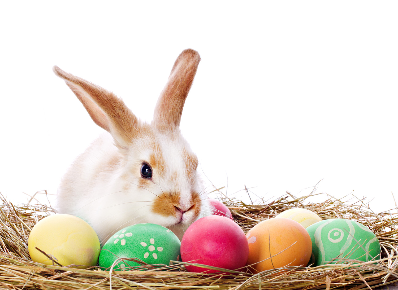easter treat egg bunny - photo #29